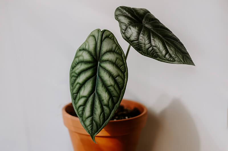 Jak robić dobre zdjęcia roślinom