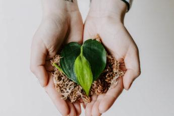 Jak ukorzeniać rośliny w mchu Spagnum