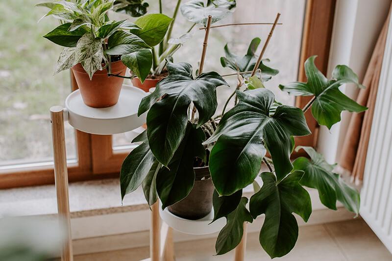 Jak zrobić dobre zdjęcia roślinom