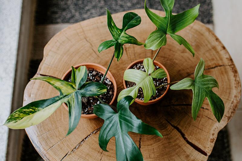 najlepsze sklepy z roślinami (2)