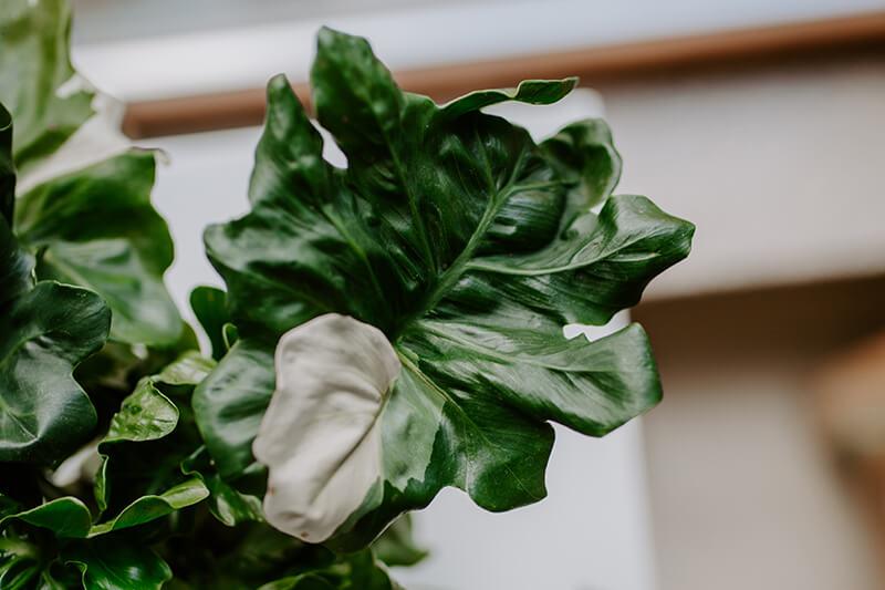 najlepsze sklepy z roślinami