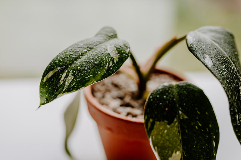 Jak nowozić rośliny (3)