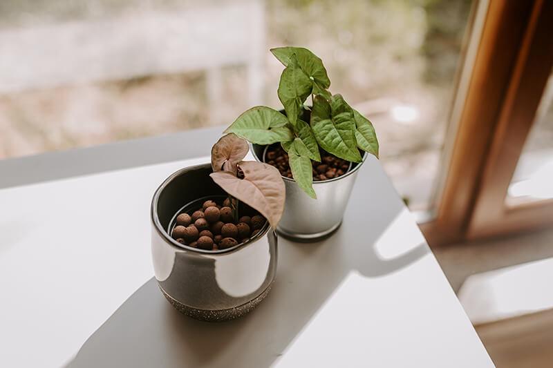 Jak uprawiać rośliny ozdobne w hydroponice (2)