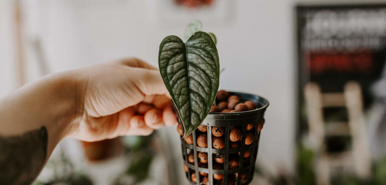 Jak uprawiać rośliny w hydroponice (1)