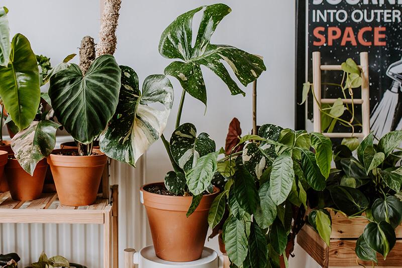 Jaki nawóz wybrać do roślin doniczkowych (1)