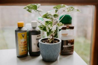 Jaki nawóz wybrać do roślin doniczkowych