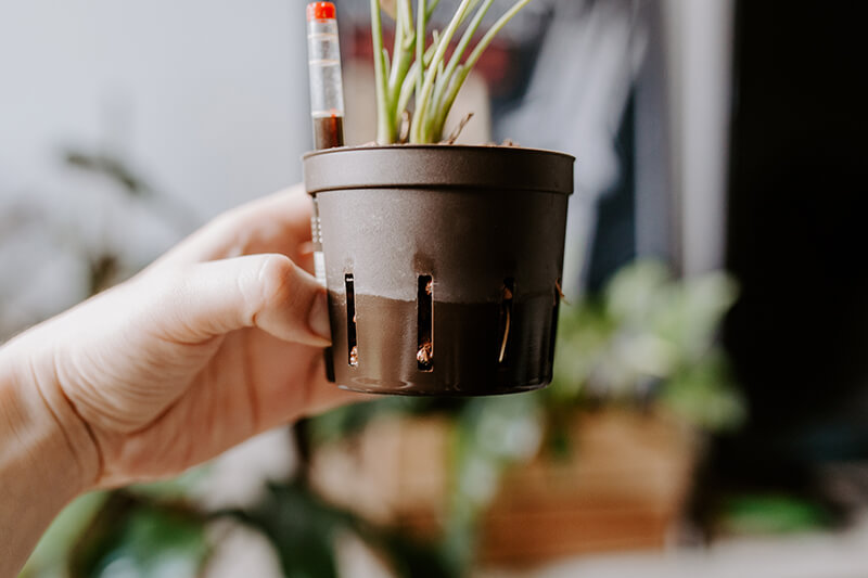 Podlewanie roślin w hydroponice