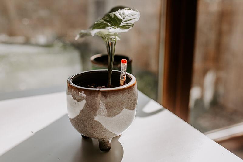 Uprawa roślin w hydroponice (2)