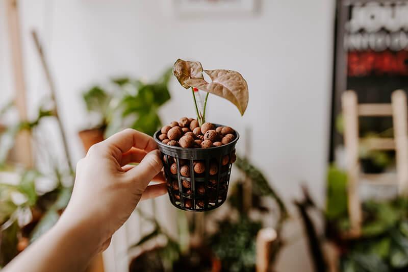 uprawa-roślin-ozdobnych-w-hydroponice-1