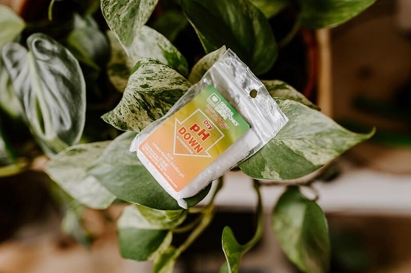 uprawa roślin ozdobnych w hydroponice (3)