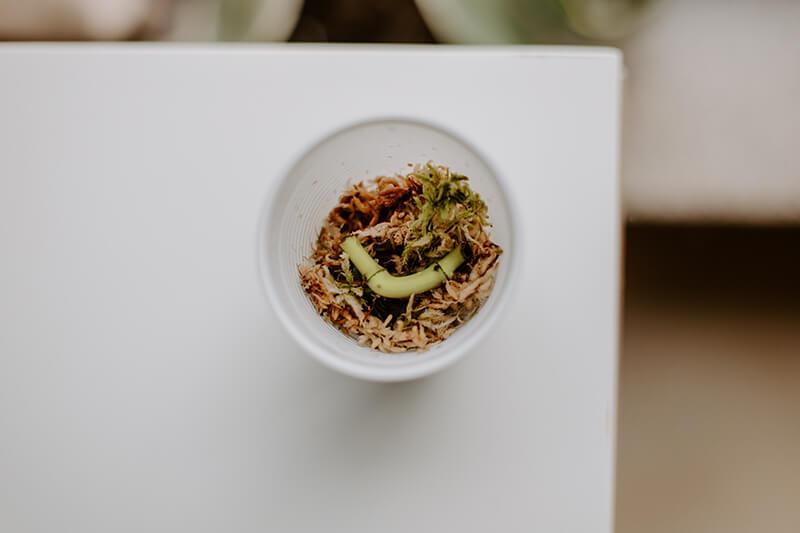 Czy można wyhodować roślinę z łodygi (1)