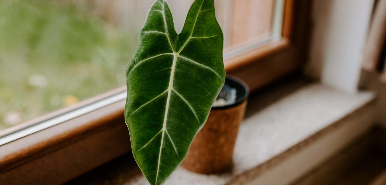 Import roślin egzotycznych (1)