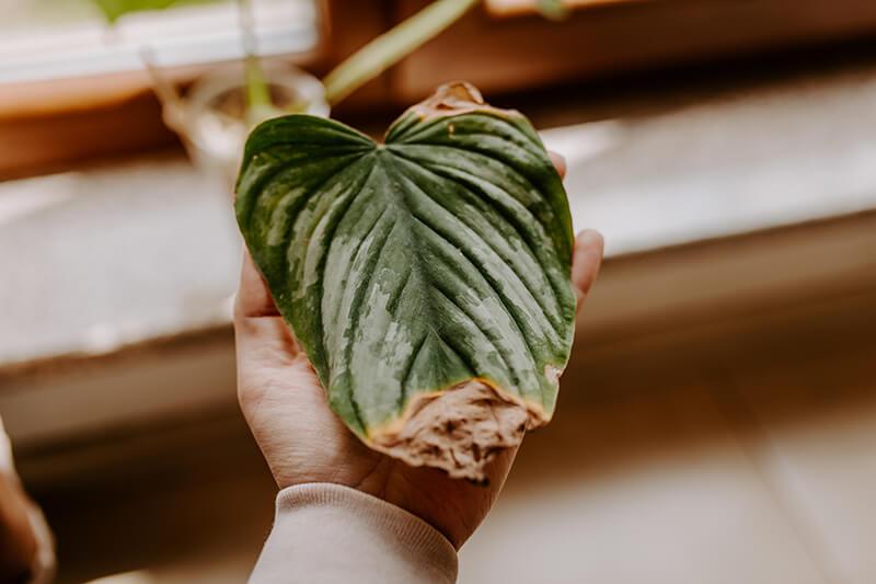 Import roślin egzotycznych (2)