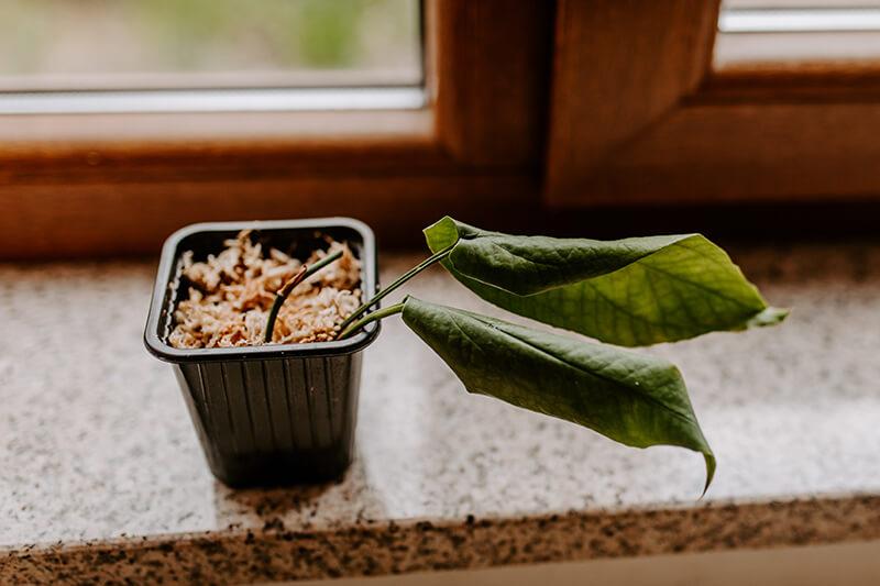 Jak opiekować się rośliną z importu (1)