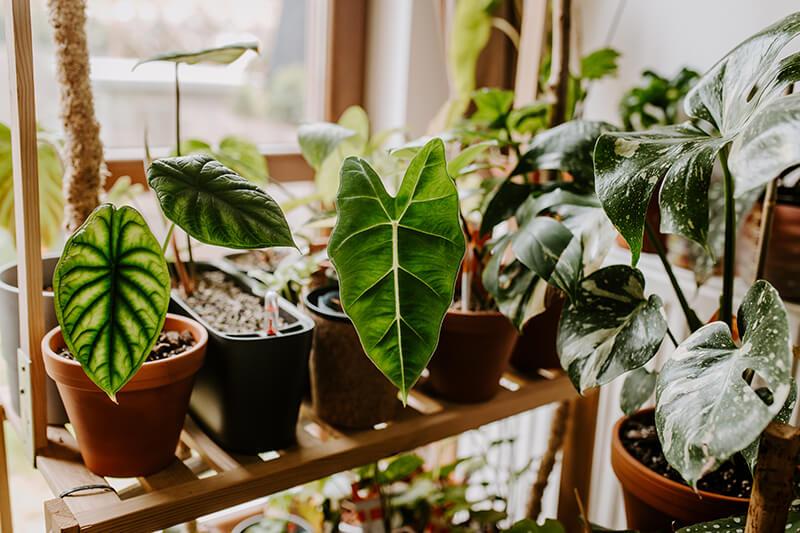Jak opiekować się rośliną z importu (5)