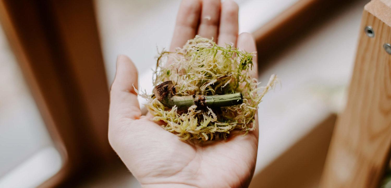 Jak wyhodować roślinę z ogryzka (2)