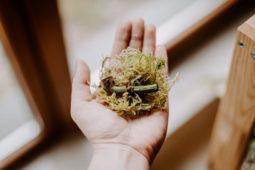 Jak wyhodować roślinę z ogryzka?