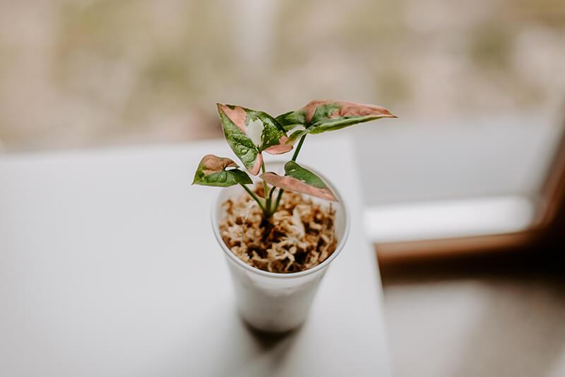 Jak wyhodować roślinę z ogryzka (5)