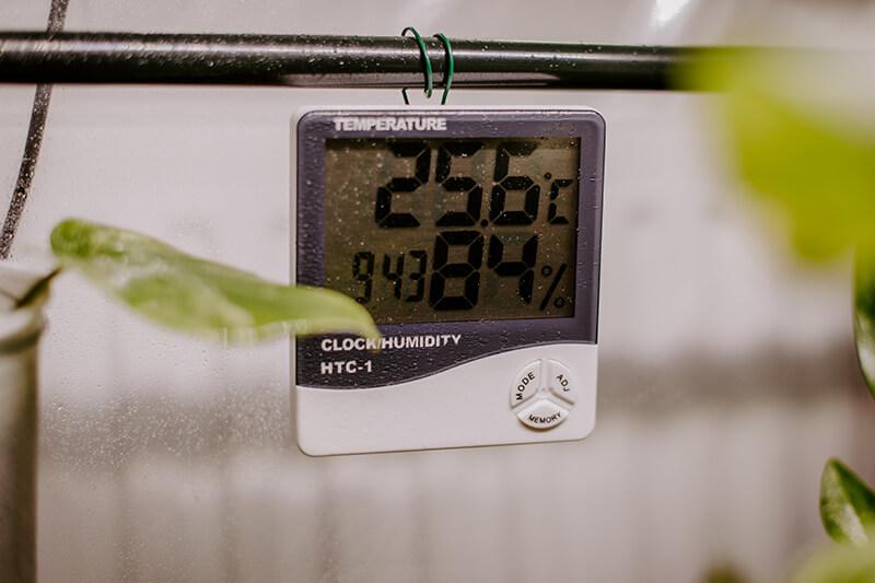 Jak wyhodować roślinę z ogryzka (7)