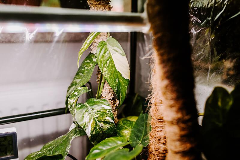 Niedroga szklarnia do roślin (2)