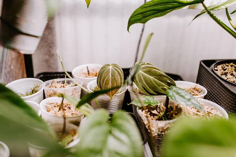 Niedroga szklarnia do roślin (3)