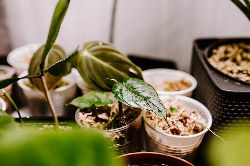 Niedroga szklarnia do roślin (4)