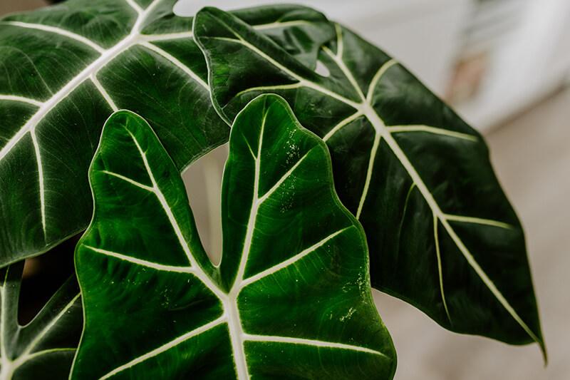 Czym się kierować kupując rośliny (1)