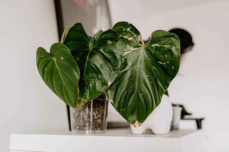 Czym się kierować kupując rośliny (3)