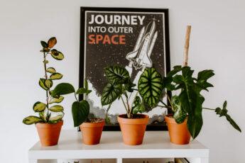 Czym się kierować kupując rośliny (6)