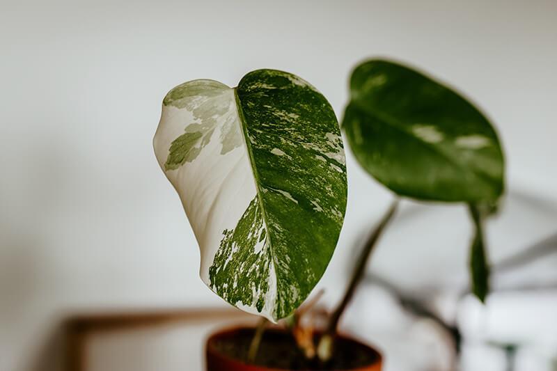 Jak wybrać odpowiednią roślinę