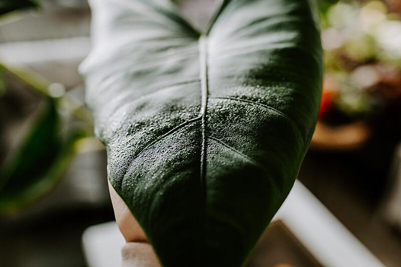 Biobizz Leaf Coat recenzja (5)