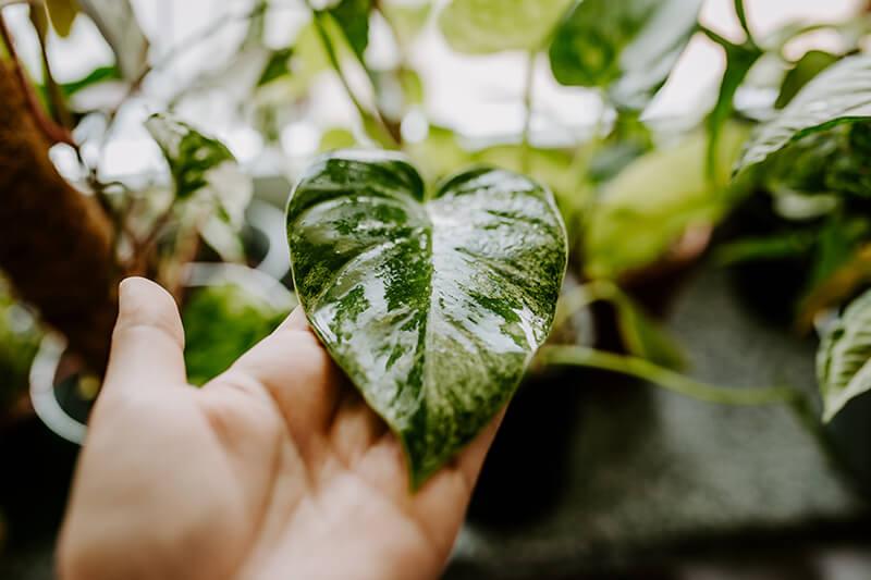 Biobizz Leaf Coat recenzja (7)