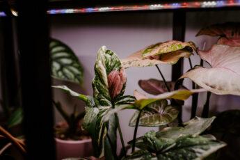Jaką lampę wybrać do doświetlania roślin (4)