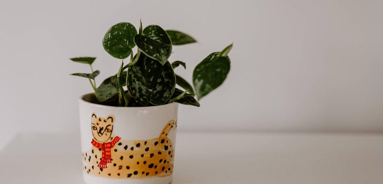Jak przygotować rośliny doniczkowe do zimy (1)