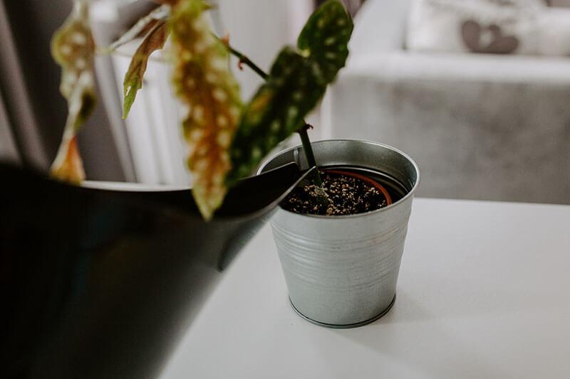 Opieka nad roślinami zimą (1)