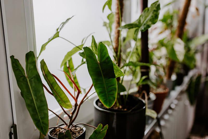 Zima a rośliny