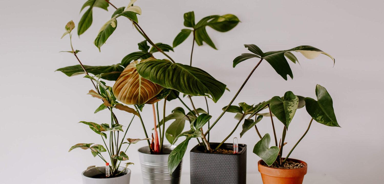 rzadkie rośliny kolekcjonerskie