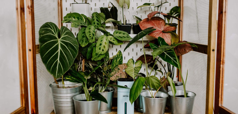 Drewniana szklarnia dla roślin (3)