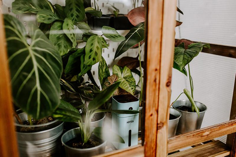 Drewniana szklarnia dla roślin (4)