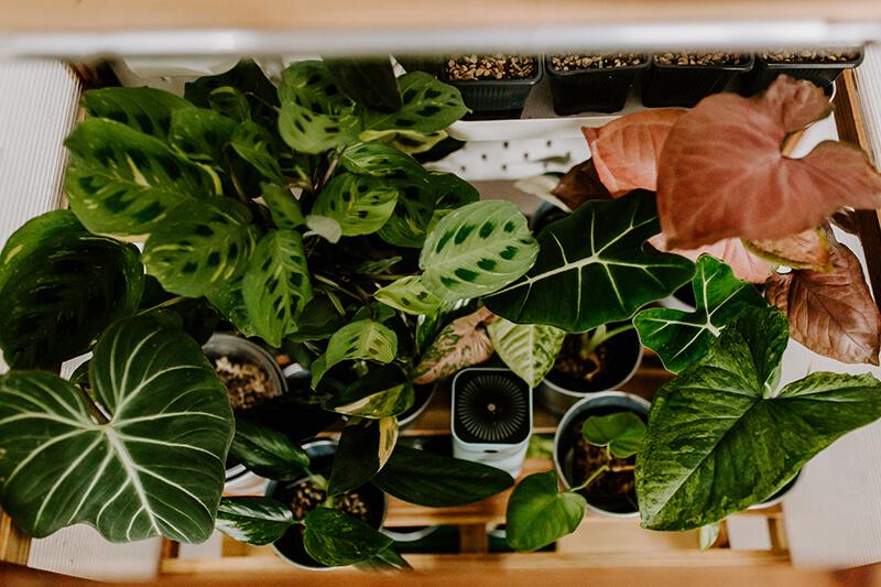 Rośliny kolekcjonerskie szklarnia (1)