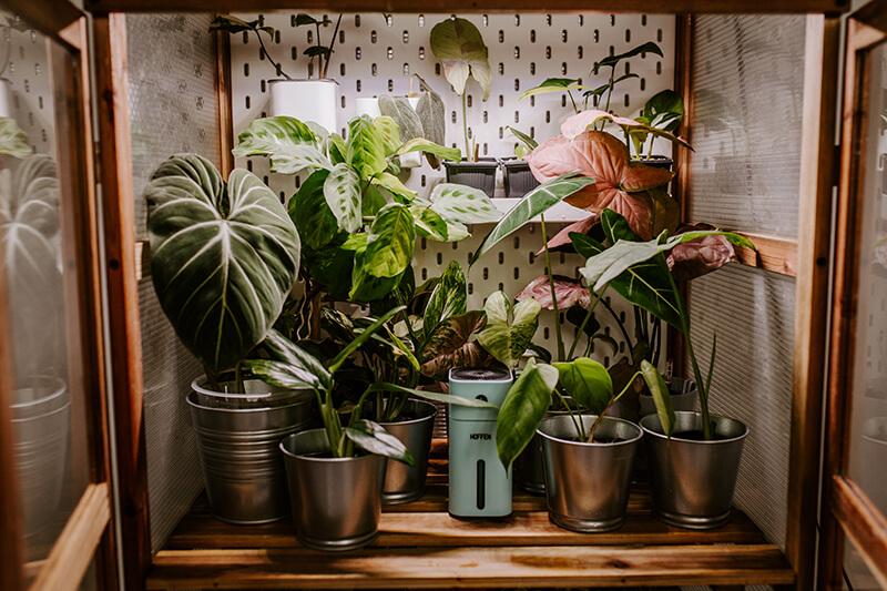 Rośliny kolekcjonerskie szklarnia (2)
