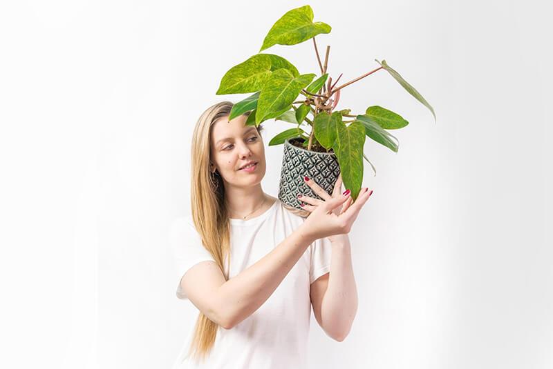 Hortiterapia (1)