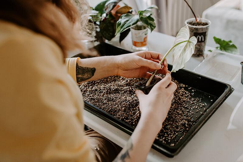 Jak uprawiać rośliny w Lechuzie (1)