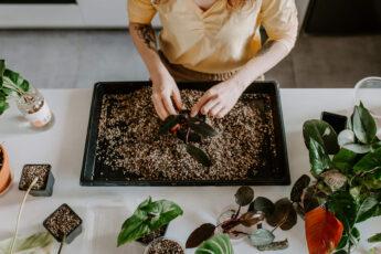 Jak uprawiać rośliny w Lechuzie (2)