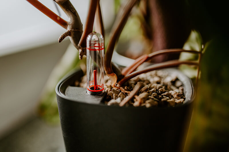 Jak uprawiać rośliny w Lechuzie (3)
