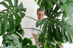 Roślinoterapia w praktyce – goodasplants