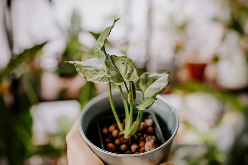 Uprawa w hydrponice jak (1)