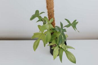 Co się sprawdza w hydroponice (1)