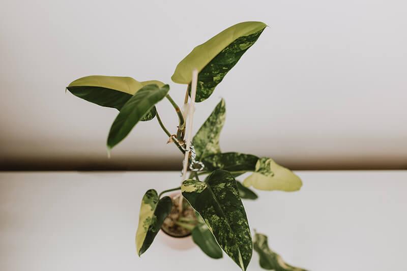 Co się sprawdza w hydroponice (4)
