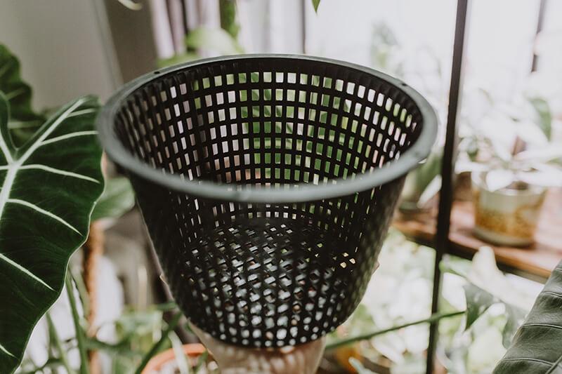 Co się sprawdza w hydroponice (6)